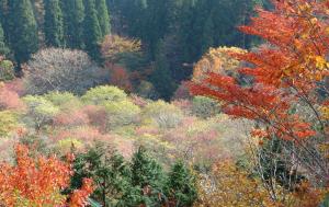 岡山森林公園の秋色