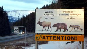 カナダ・バンフで見かけた「道路標識」