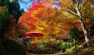 京都・神護寺の秋