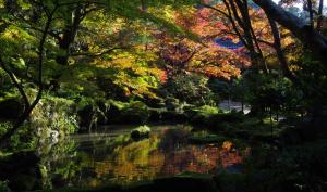 滋賀県愛荘町の金剛輪寺の秋
