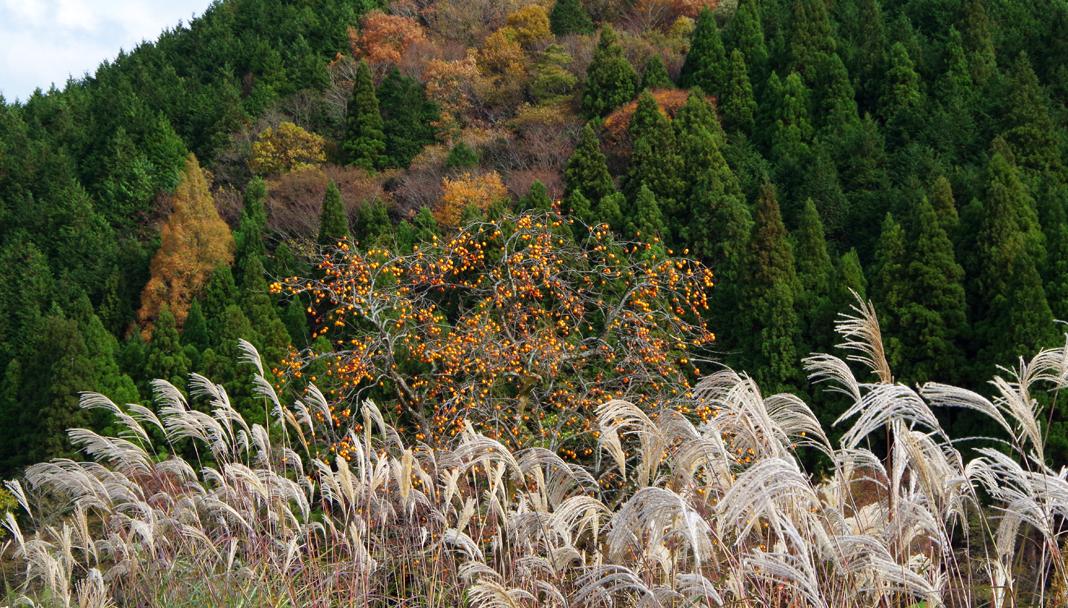 鳥取の山里の秋