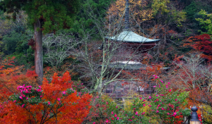嵯峨野・法輪寺・多宝塔の秋